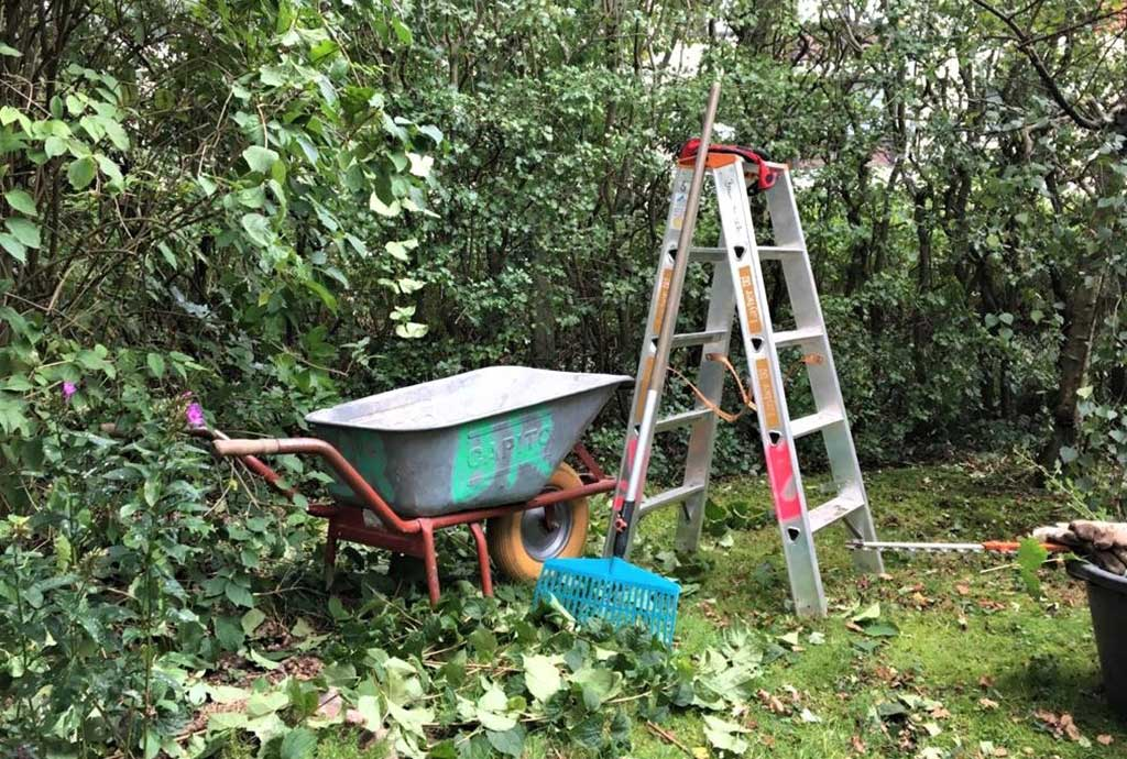 baumrausch Gartengestaltung Pflege